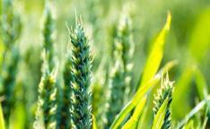 2020年可以申报的农业补贴项目有哪些?